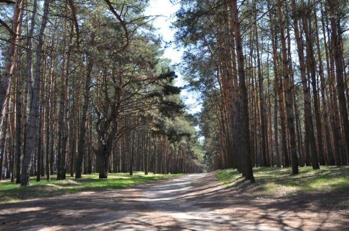Каховка Природные достопримечательности - Сосновый бор